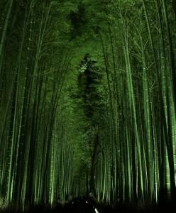 嵯峨野の竹林ライトアップ